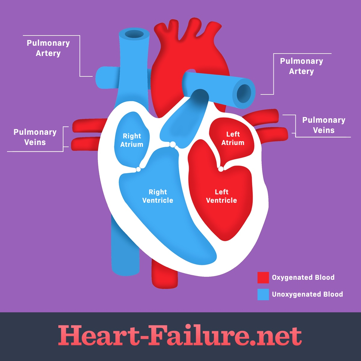 How Does the Heart Work & How Does Heart Failure Develop?