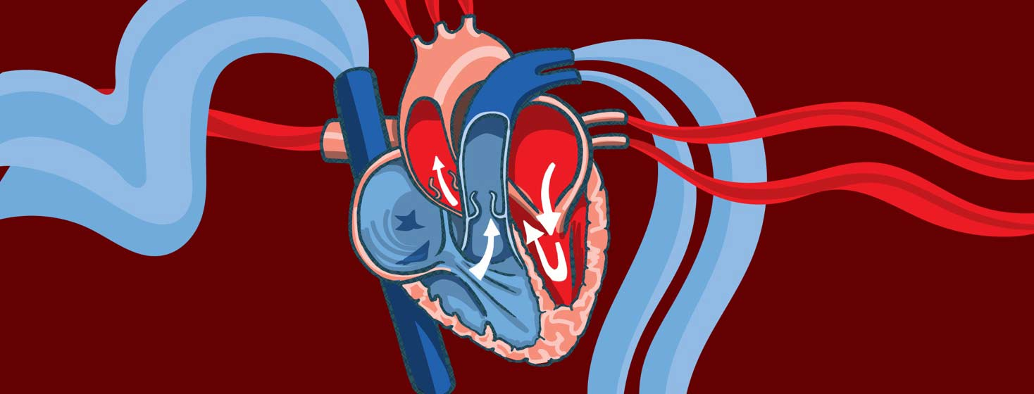 a diagram of a heart showing blood pumping in and out of the blood vessels